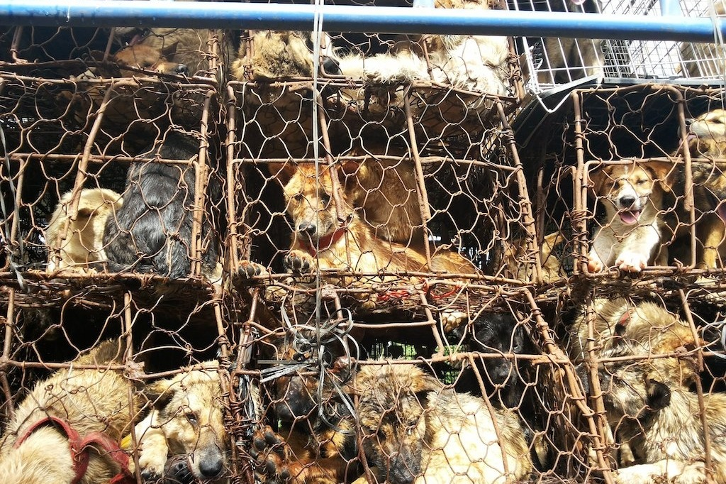 Help stop the Lychee Massacre. Save tortured dogs.